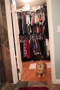 Stitch Fix, Boo the Pomeranian, Not Impressed